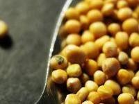 mustard-600005-m