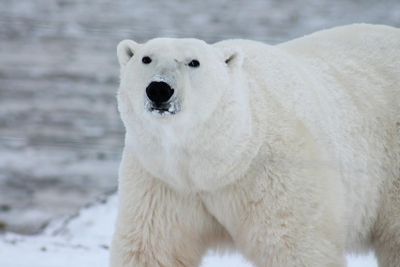 Feeling Bearish?  Don't Hibernate!